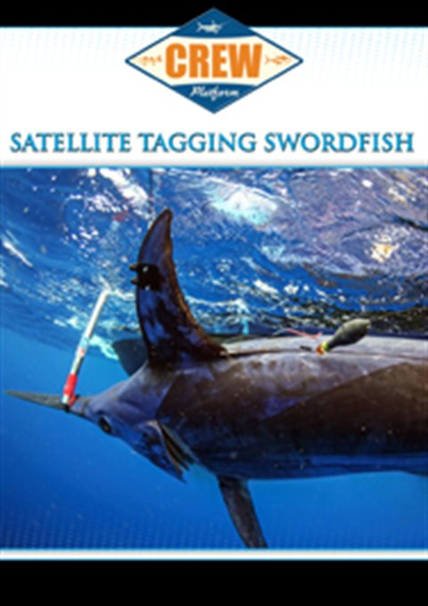 Satellite Tagging Swordfish